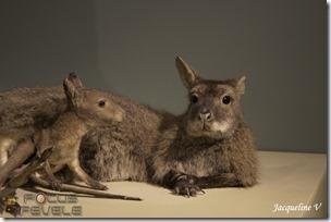 Musée Histoire Naturelle LILLE-7148 (Copier)