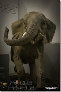Musée Histoire Naturelle LILLE-7155 (Copier)