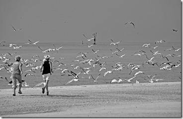051 - Francis Flinois concours 2013 nature