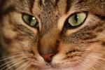 018 Le chat qui parlait aux oiseaux Lilian Jackson Braun - SAYES Jean-Louis.JPG