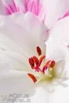 001-Pollen-Adrien-SIMON1.jpg