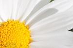 002-Soleil-Floral-Adrien-SIMON1.jpg