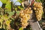 041-La-vigne-Gilbert-Vanbiervliet.jpg