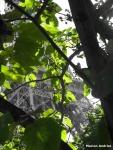 081 Eiffel A Travers Feuilles - ANDRIST Marion.JPG