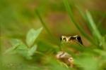 052-Cache-cache-avec-une-grenouille-Deroulez-Aurore.jpg