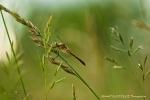 067-perche-dans-les-herbes-FAUVERGUE-Mickal.jpg