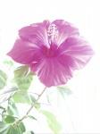 MarioM-Fleur.jpg