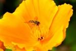 077-Maya-jaune-Christophe-Ziobro.jpg