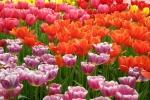 096-Tapis-de-fleurs-Fourez-Carolefleurs-086.jpg