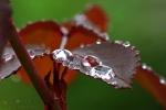 099-Aprs-la-pluie-Pardoen-Christian.jpg