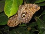 105-DUO-de-papillons.jpg