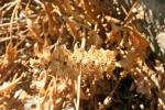 117-Dans-un-jardin-au-climat-aride-Bouchart-Julie.jpg