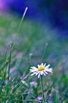 128-Nuite-florale-Ribeiro-Linda.jpg