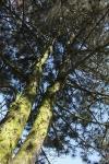 156-Juste-un-arbre-Deram-Nathalie.jpg