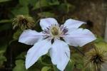 168-Fin-de-lt-pour-la-fleur-MICHELE-BUISSETTE.jpg