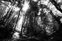 002 - La forêt hantée - COTTET Marion.jpg