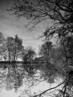 005 - L'Aube sens dessus dessous - Laure Laguillier_N&B nature - LAGUILLIER Laure.jpg