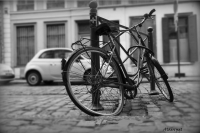 013 - Vélo - GROSSE Alain.jpg