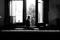019 - Par la fenêtre - DE LUCAS Sophie.jpg