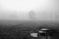 072 -Brume matinale - NICOLAS Ghislaine.jpg