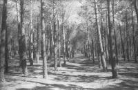 084 - romain la casa-seul dans la forêt-catégorie la nature.jpg