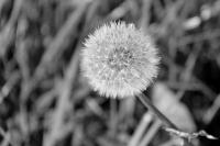 098 - Avant de s'envoler - NATURE - FERRAS Catherine.JPG