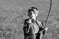 100 - Fin de balade en forêt en automnem find e journée. NATURE - FERRAS Catherine.JPG