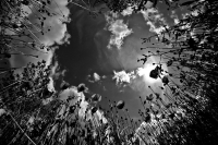 108 - Au coeur de la nature - BOURDON Jessica.jpg