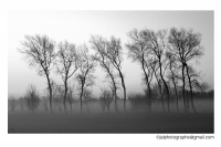 900 - paysage - Jean-Alain LEROY.jpg